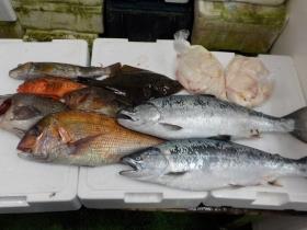 16鮮魚セット2016430