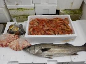 1鮮魚セット2016531