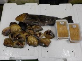 9鮮魚セット2016531
