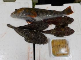 20鮮魚セット2016531