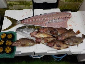 17鮮魚セット2016630