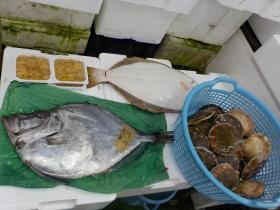 24鮮魚セット2016630