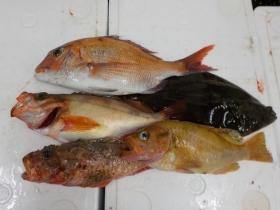 25鮮魚セット2016630