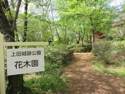 IMG_4545 花木園