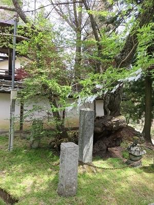 IMG_5885 墓前の桜