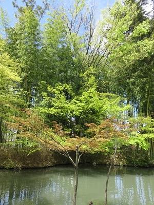 IMG_4951 心の池