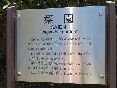 IMG_5001 菜園
