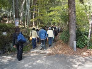 タケノコ堀り