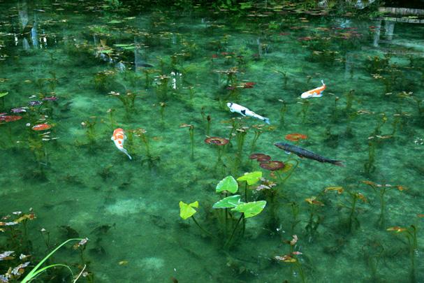 shio_モネの池1