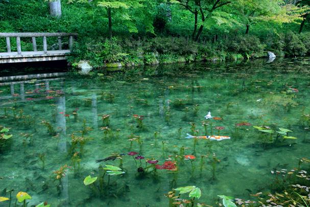 shio_モネの池