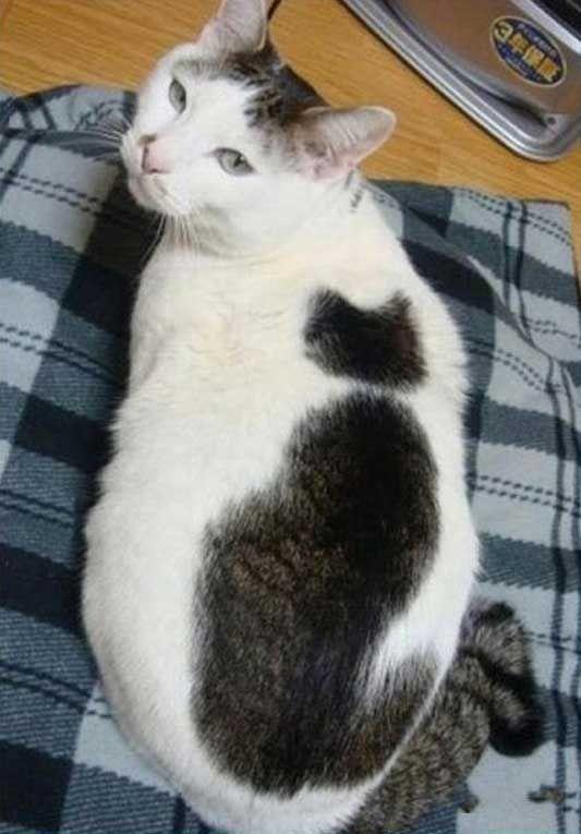 猫の中に猫がいる