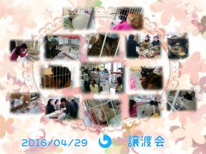 20160429譲渡会
