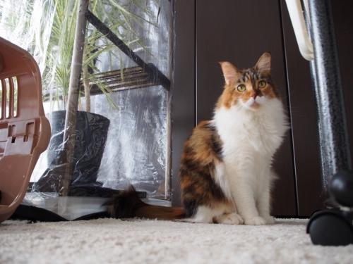 小豆猫1月
