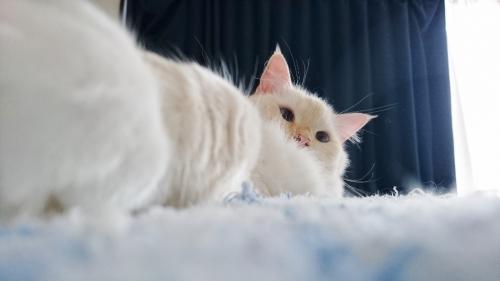 白玉猫_グッタリ5