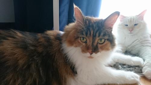小豆猫_スマホ2