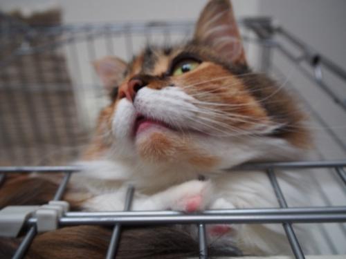 小豆猫‗マズル