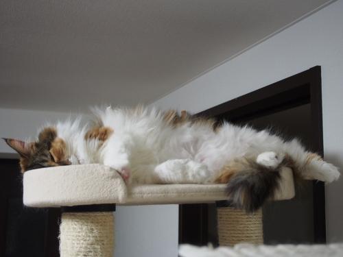 小豆猫‗モフモフ1