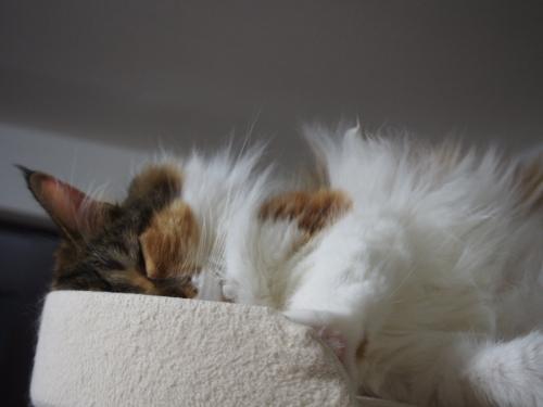 小豆猫‗モフモフ2