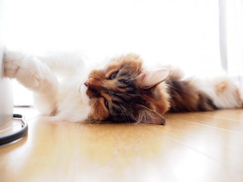 ダレダレ小豆猫1