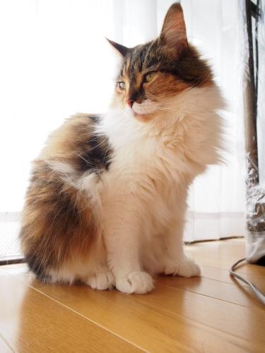 小豆猫5月