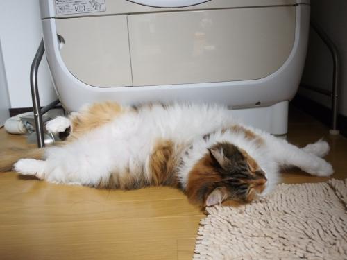 洗濯機前‗小豆猫1