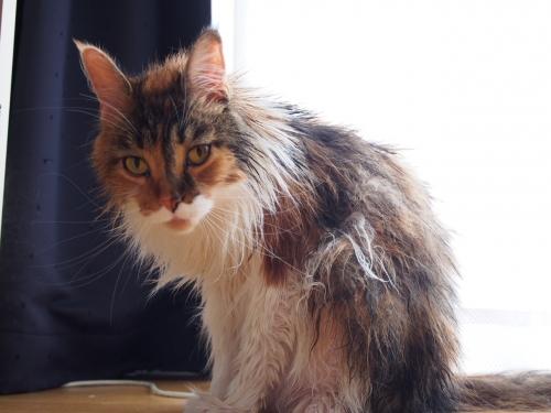 濡れ猫‗1