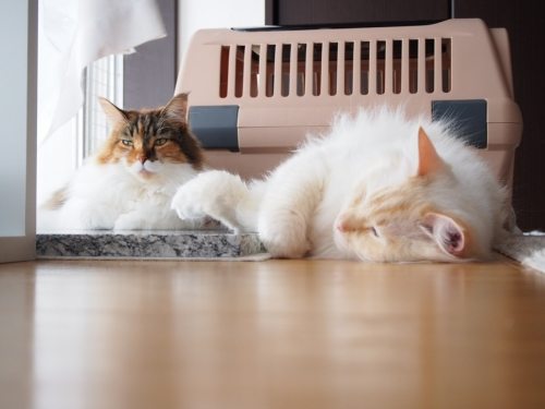 微妙な距離の2猫_1