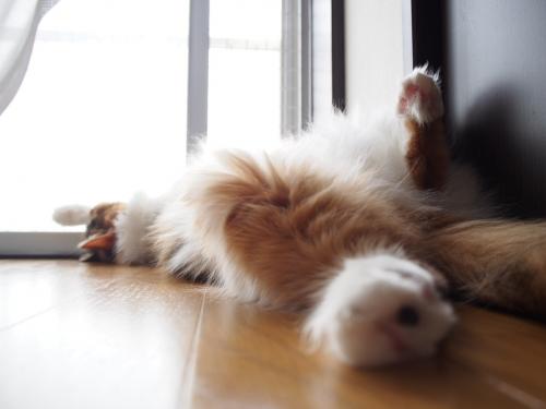 キリリ4_小豆猫