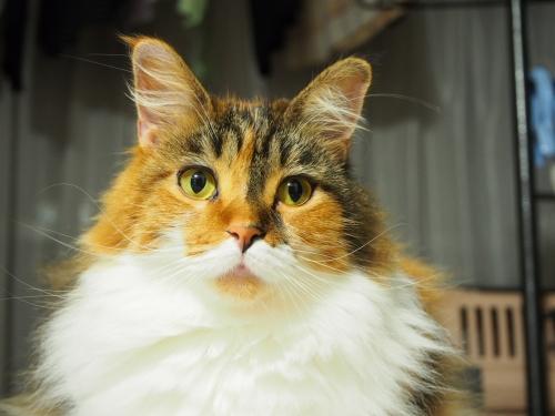 小豆猫見つめる