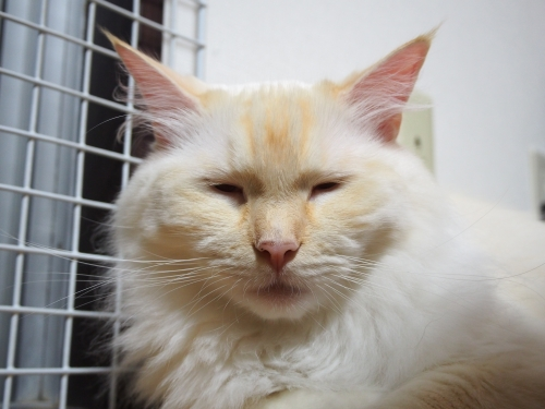 ブサイク白玉猫2