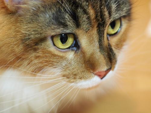 小豆猫(^▽^;)