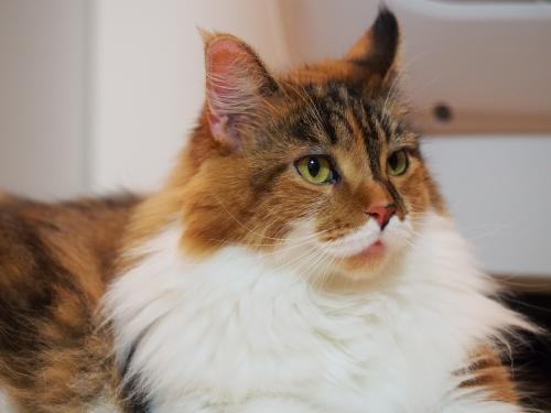 マクロ小豆猫1