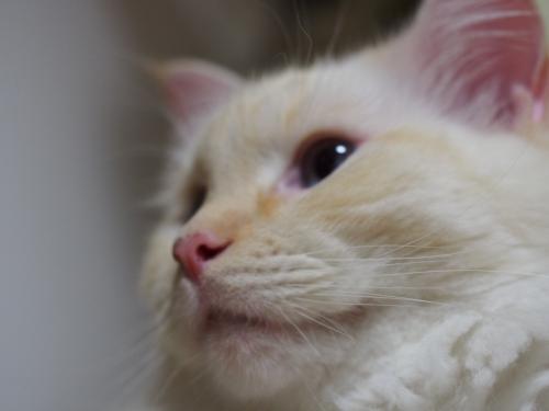 白玉猫(^▽^;)