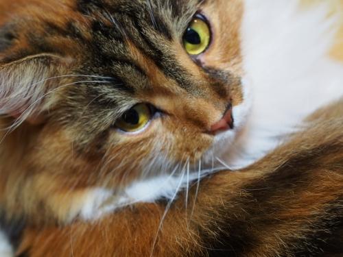 マクロ小豆猫3