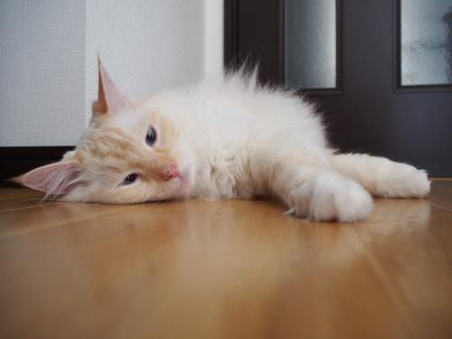 いきだおれ白玉猫