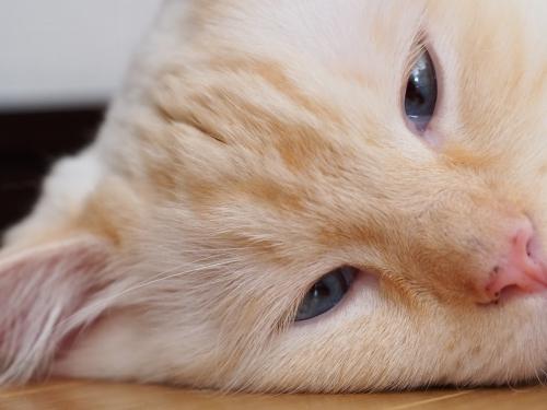 マクロ白玉猫2