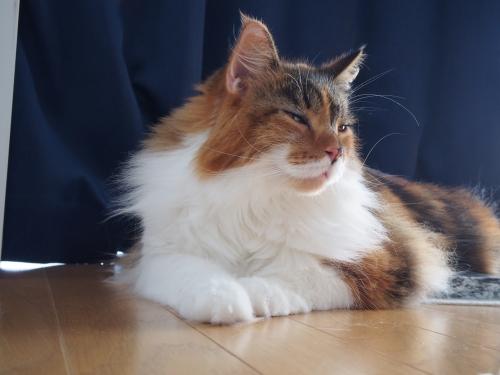 寝起きの小豆猫1