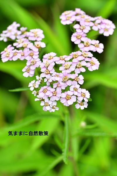 花 (1)