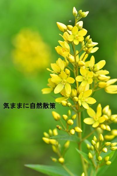 花 (3)