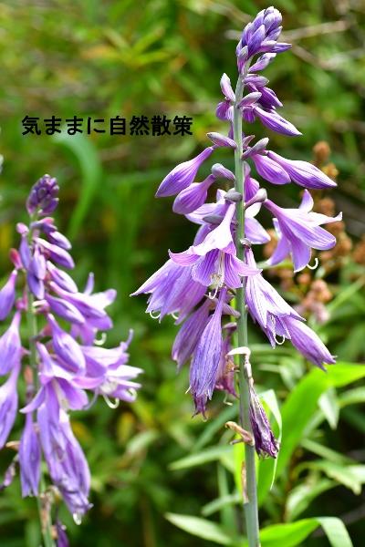 花 (4)