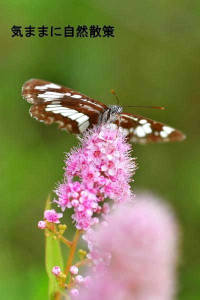花と昆虫 (4)