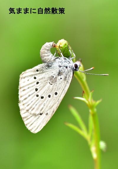 花と昆虫 (3)