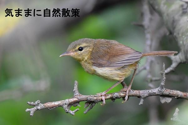 160815幼鳥たち (1)