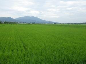 筑波山と田んぼ