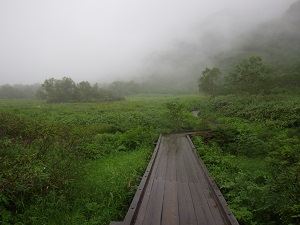 栂池自然園2
