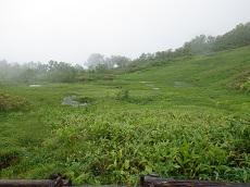 栂池自然園15