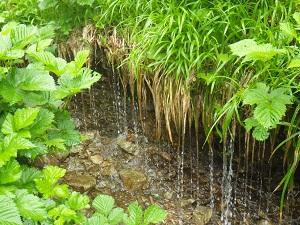 栂池自然園16