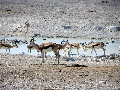 namibia2-10.jpg