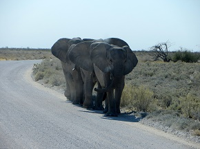 namibia2-11.jpg