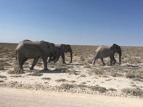 namibia2-12.jpg